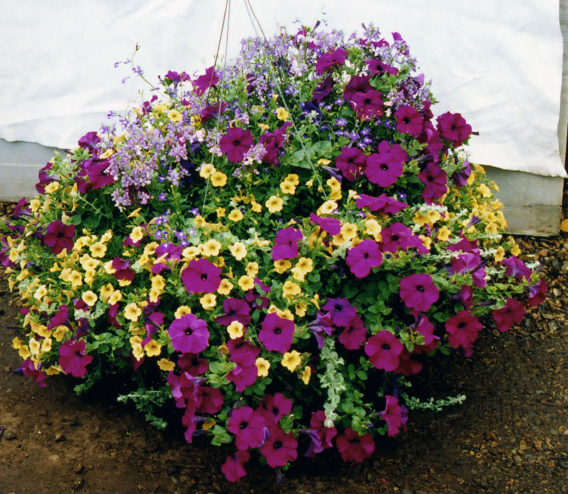 hanging_basket3.jpg